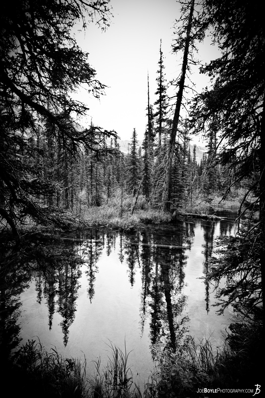 "Winner of Earthshots Photo of the Day in March 2012! I took this photo during a backpacking excursion through Glacier National Park located in northern Montana, I was able to capture these trees on the bank of this slow moving river. I like this photo because it has a ""cool"" yet ""eerie"" feel to it, due to the tallest & apparently dying pine, leaning over the river."