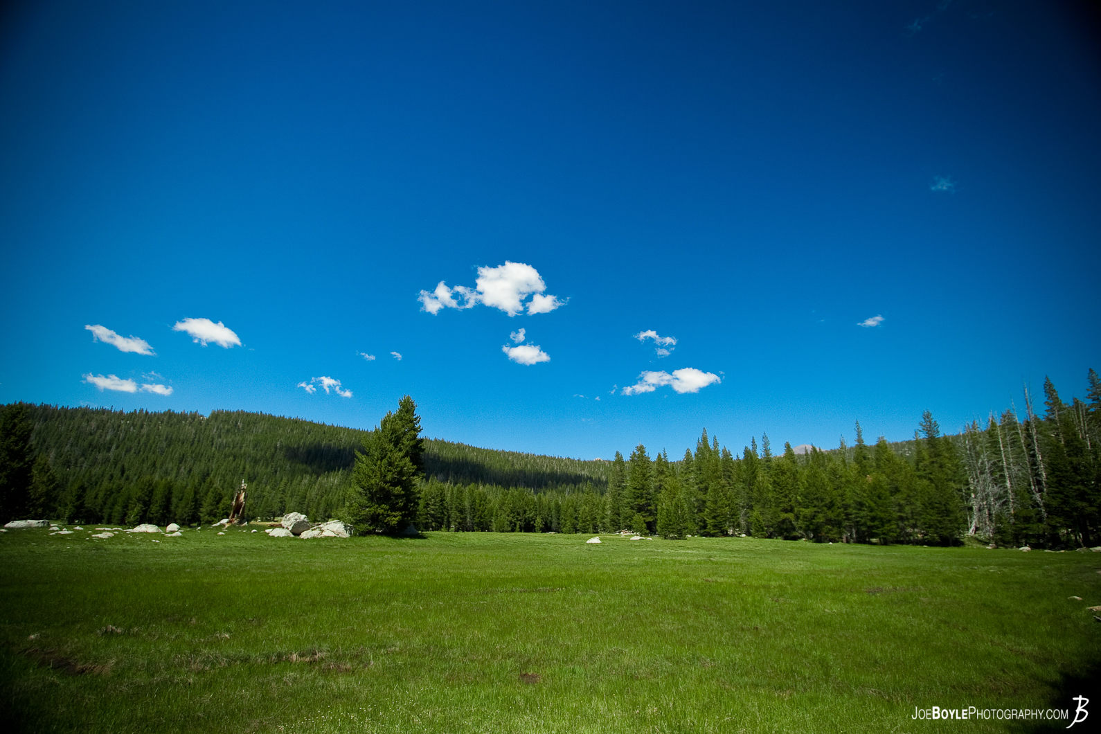 This field was near Lembert Dome along the John Muir Trail in Yosemite National Park.