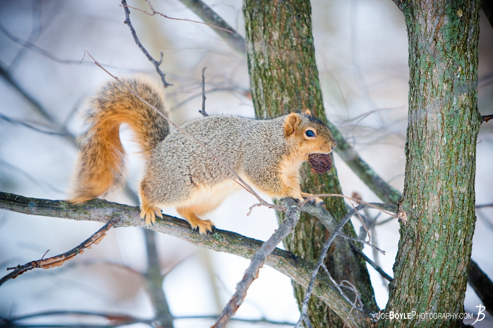 I captured a photo of this squirrel on a nice snowy day as I was hiking through the Cleveland Metroparks.