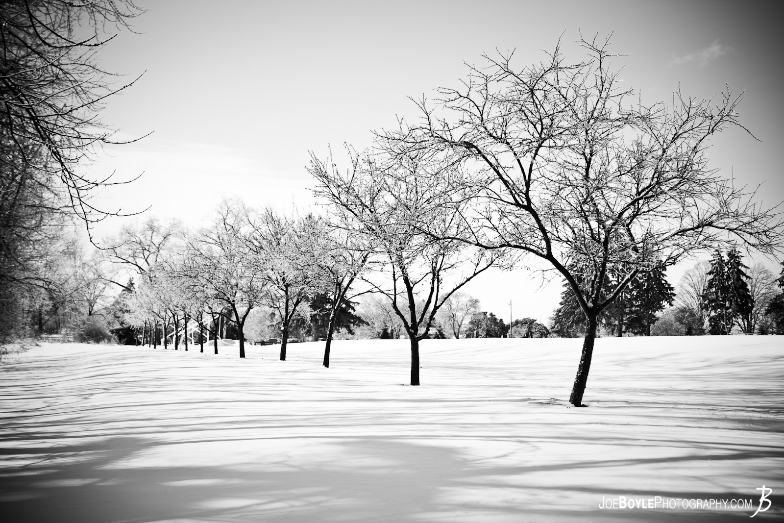 I captured this photo after a snow storm. The storm provided some great picture opportunities that I was able to capture the following day including this row of trees.