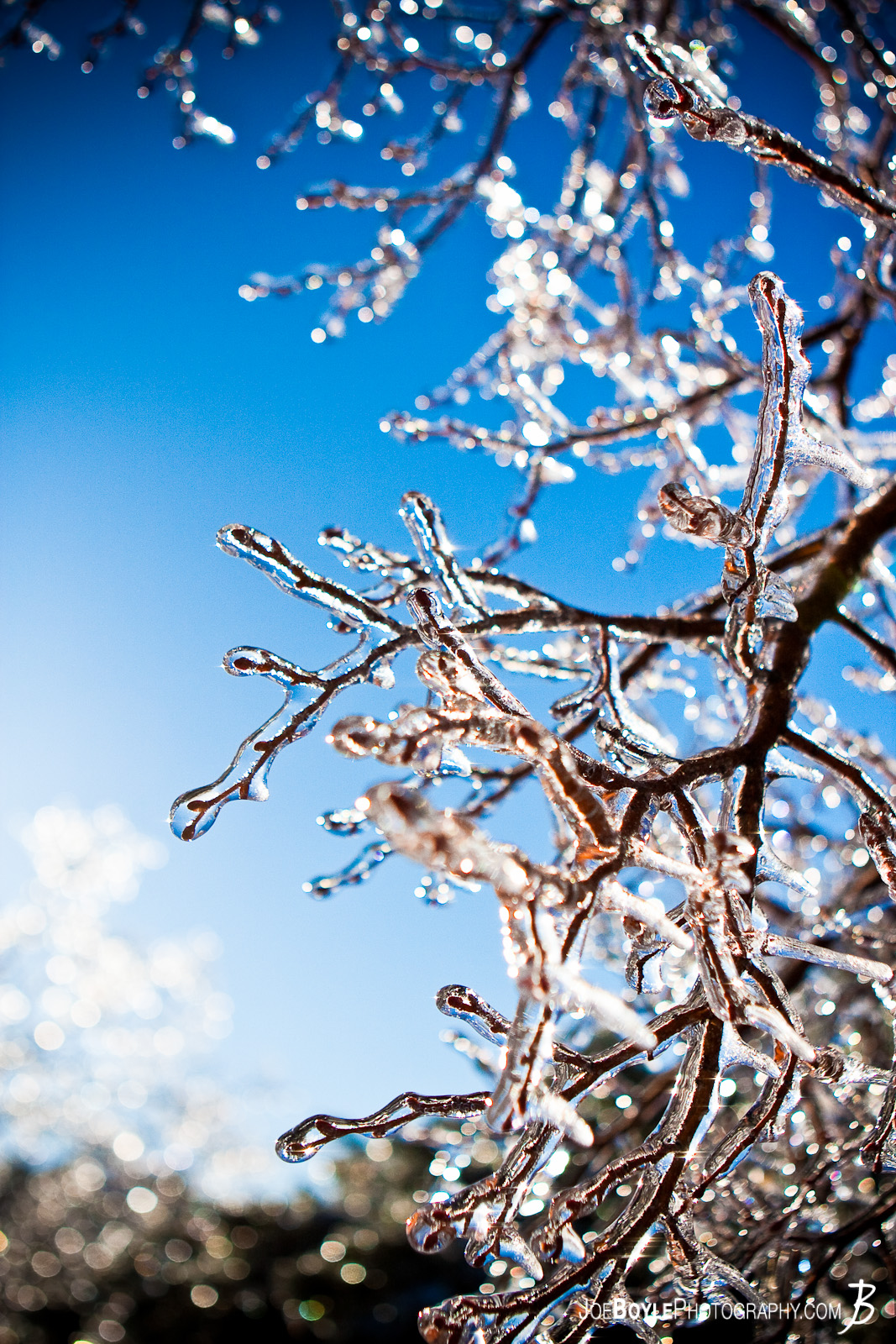 I captured this photo after an ice storm came through the Cleveland area. The storm provided some great picture opportunities that I was able to capture the following day including these tree branches coated in ice on the backdrop of a beautiful blue sky!