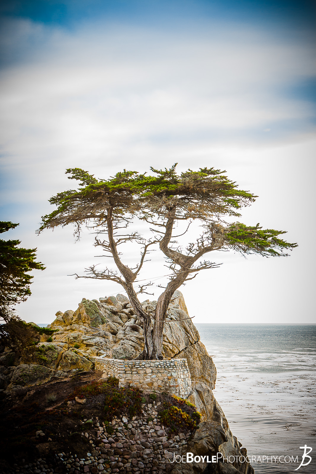 When I was traveling to California I made it a point travel along the gorgeous 17 Mile Drive near Carmel by the Sea. There were many attractions on the drive including otters, sea lions and of course the infamous Lonely Cypress Tree