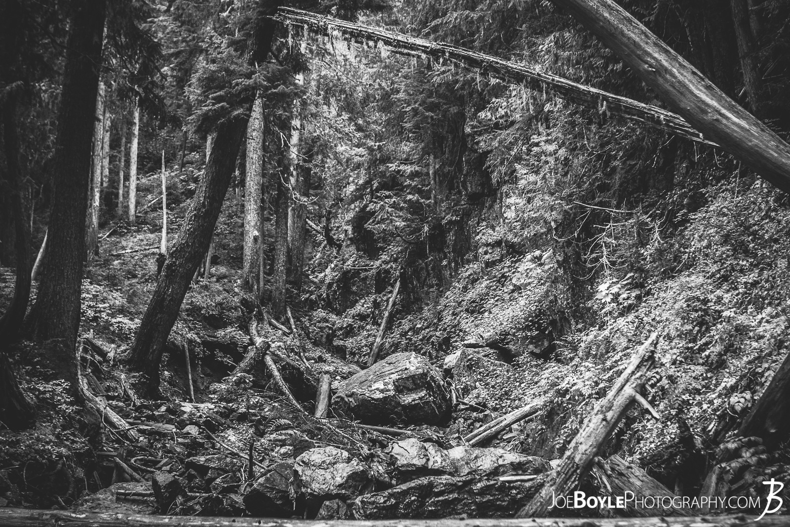 "A photo of the forest with a foot bridge included. I know what you're thinking... ""Shouldn't this be in color so the greens pop out"". For some reason I liked it better in black and white. I think it showed more contrast between all the trees and leaves."