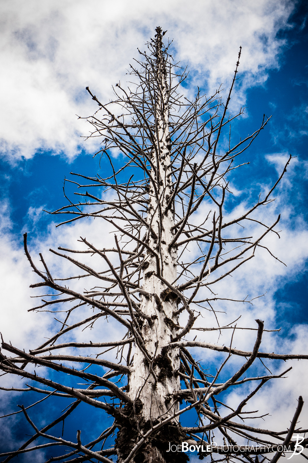 Not everyone would take pictures of a dead pine tree, but I thought this looked pretty cool. It was gnarly and had some interesting contrast against the blue sky!