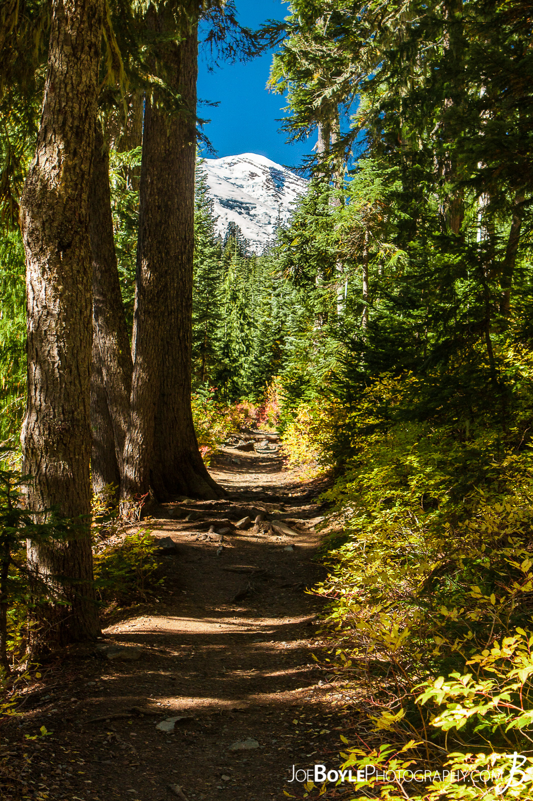 I took this photo of Mount Rainier from the Wonderland Trail near Summerland Campground.