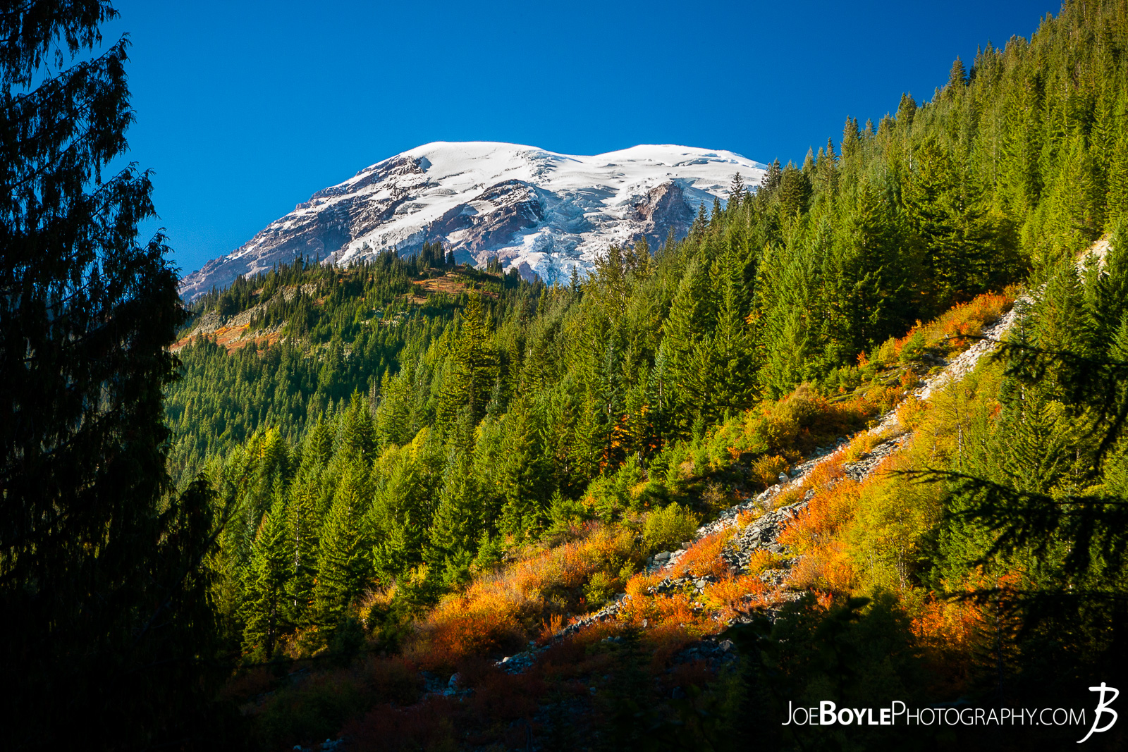 "On our way to the Paradise River Campground we were able to see the sunset on Mount Rainier and the few trees and bushes that were already turning ""fire red"" and orange for the approaching Autumn season!"