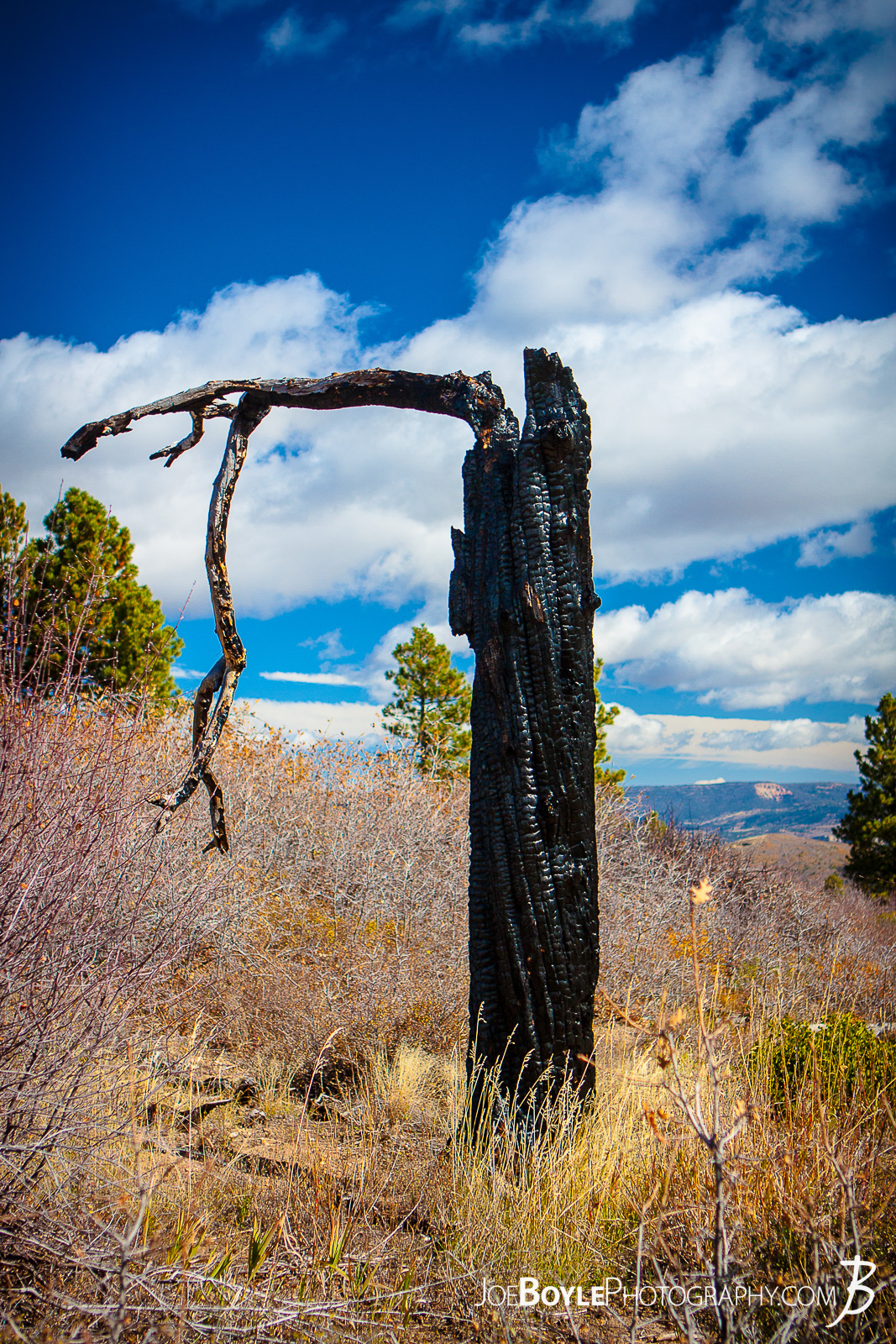 This is a photo of a burnt tree trunk that I saw while hiking the West Rim Trail in Zion National Park.  Here are some links to more articles and hiking info about the West Rim Trail and hiking trails in Zion National Park and a Map of Zion National Park.