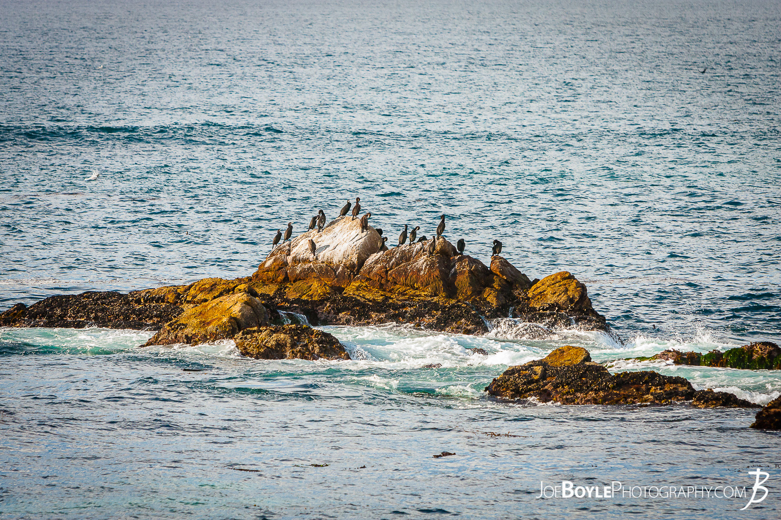 On our way along the 17 Mile Drive to Carmel by the Sea there was quite a bit of wildlife! Their were a lot of birds sitting on rocks like this one pictured here. I believe they are called Cormorants (a.k.a. Shags). Here is the website where I got my info from so if I'm wrong, so is this gal too! :) http://www.orcawatcher.com/2009/03/17-mile-drive-and-todays-bird-watching.html
