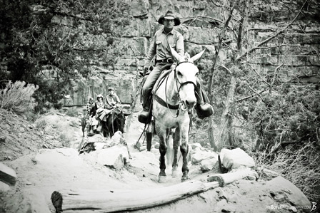 grand-canyon-mules