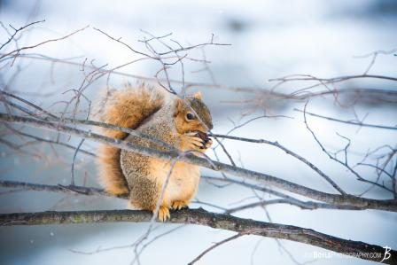 squirrel-on-tree-branch