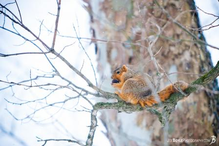 squirrel-sitting-on-branch-in-the-snow