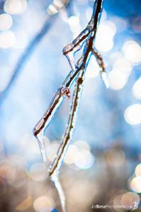 tree-branch-coated-with-icicles