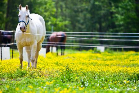 white-horse-in-green-field