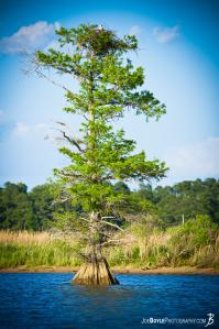 tall-tree-with-roots-in-water