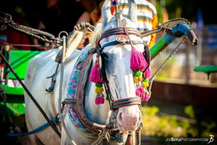 horse-and-buggy-in-india