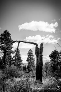 burnt-tree-trunk-on-west-rim-trial-in-zion-national-park-black-white