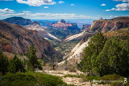 canyons-valleys-trees-in-zion-national-park