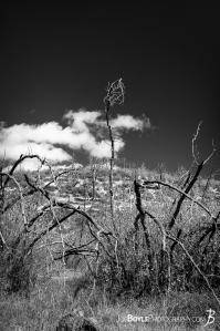 gnarly-withered-surreal-cool-looking-trees-black-white-portrait