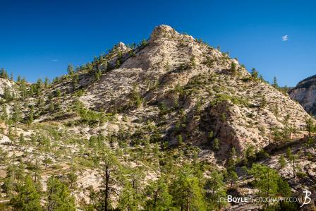mountain-with-trees-on-the-west-rim-trail-in-zion-national-park