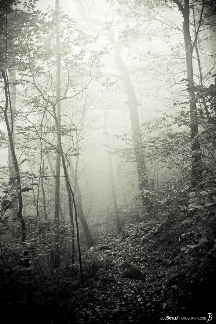 fog-on-the-appalachian-trail