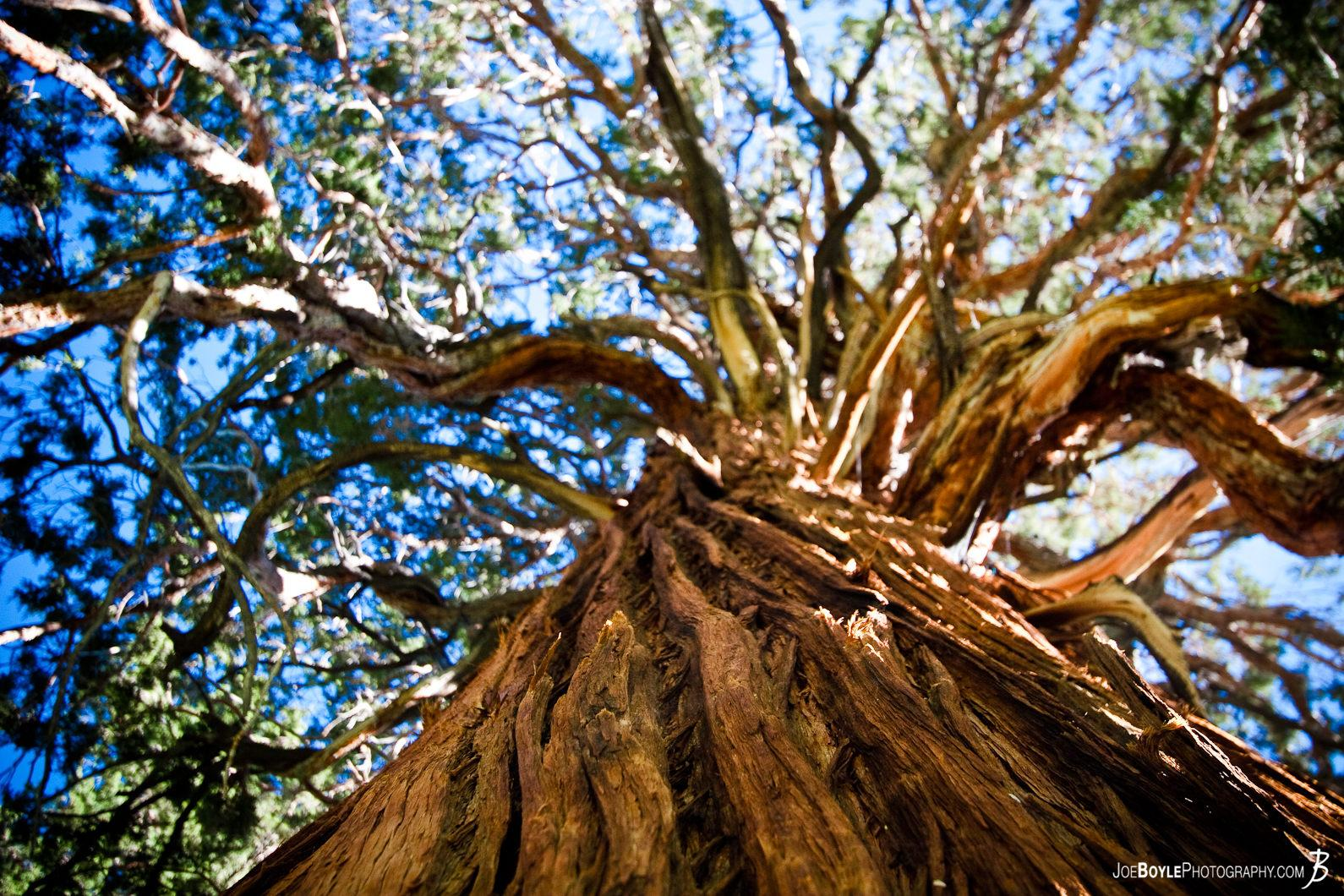 looking-up-a-tree