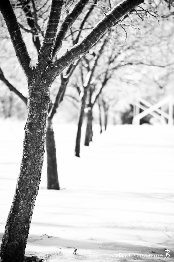 portrait-row-of-trees-in-the-snow-black-white