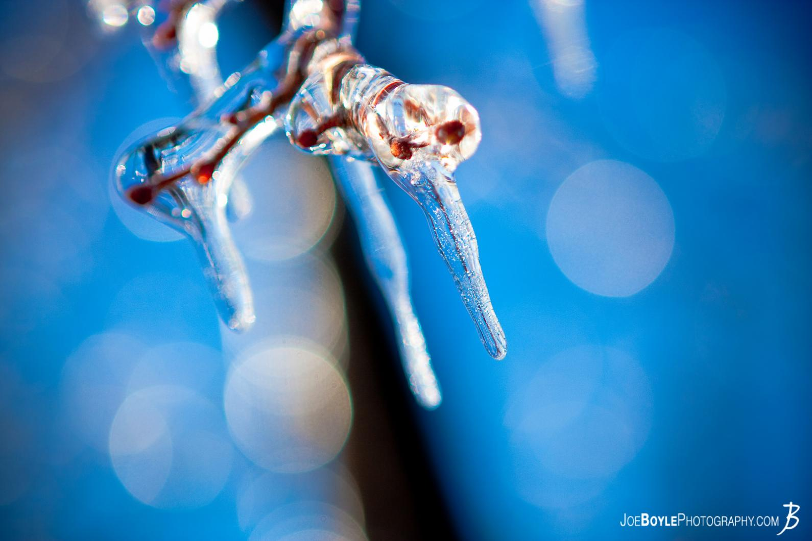 icicle-clinging-to-tree-branch-close-up