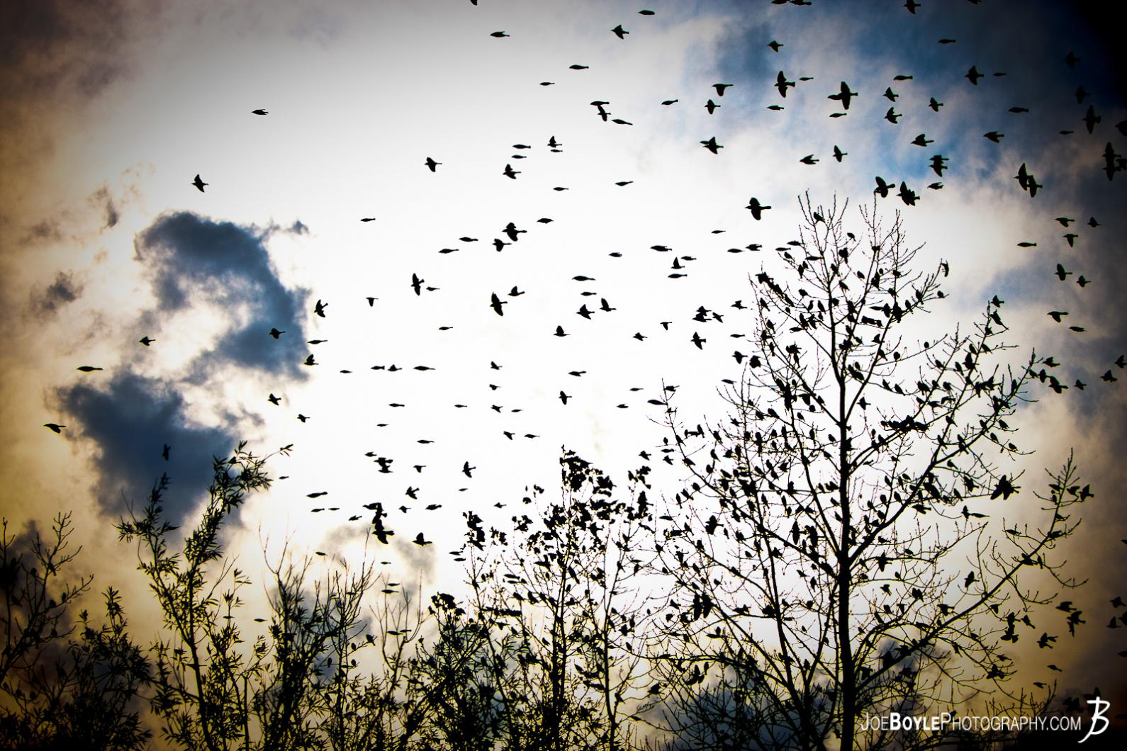 birds-on-tree-flying-away