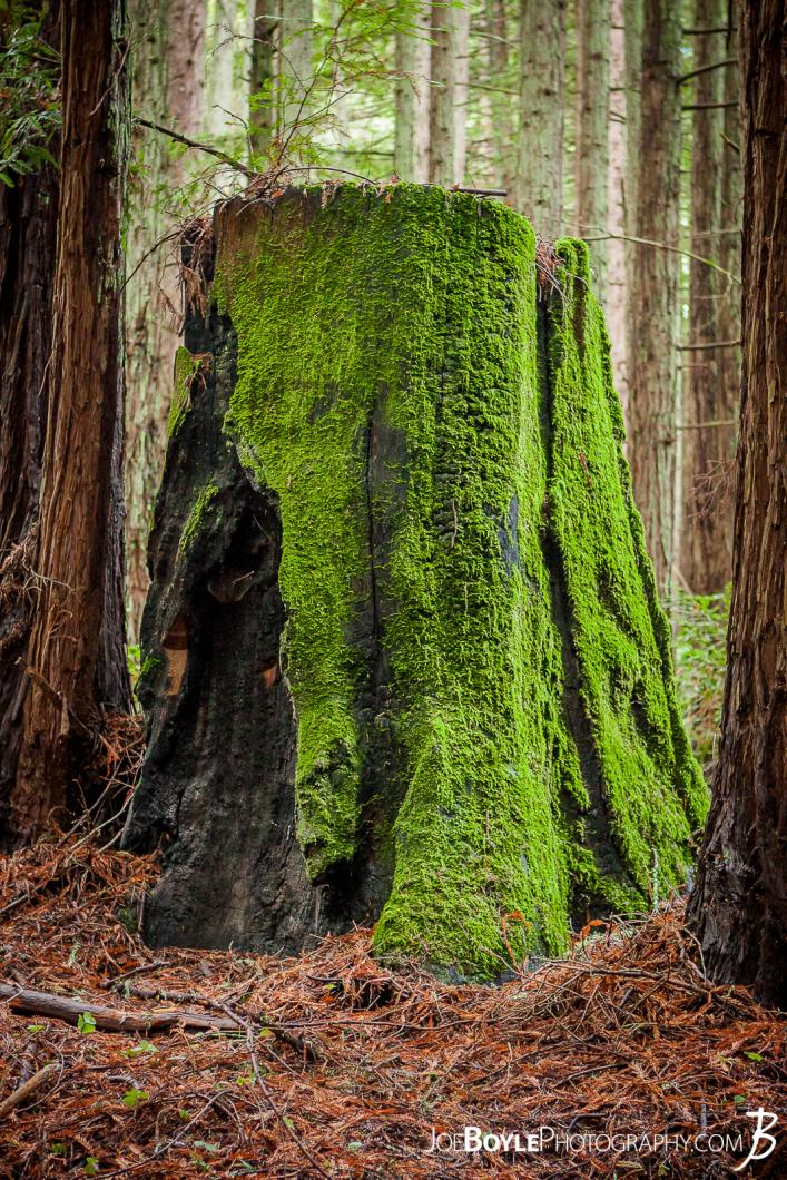 tree-stump-with-moss
