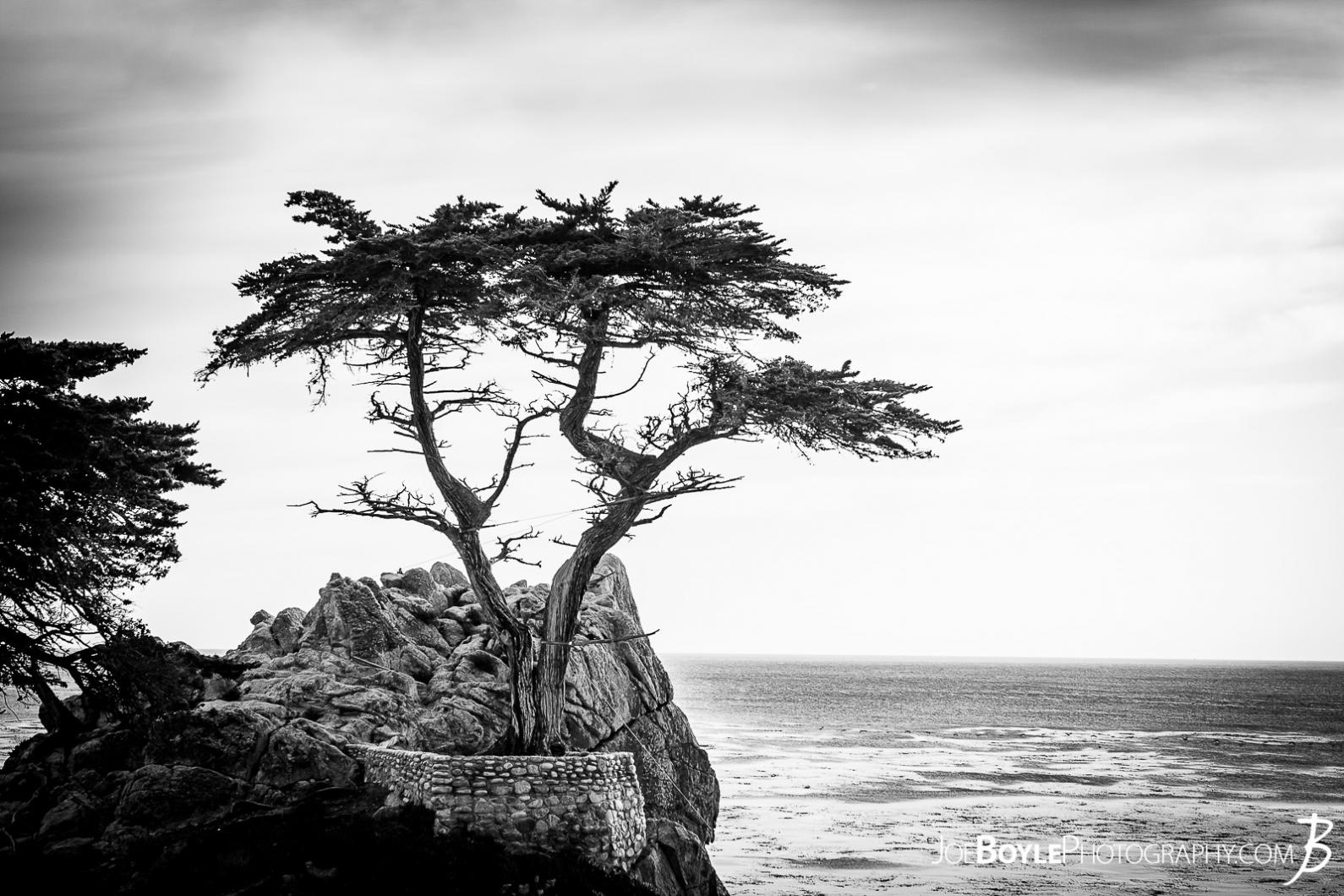 the-lonely-cypress