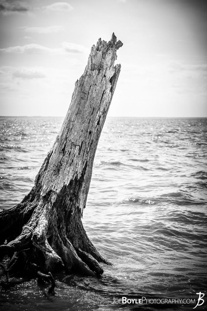 tree-trunk-in-the-lake