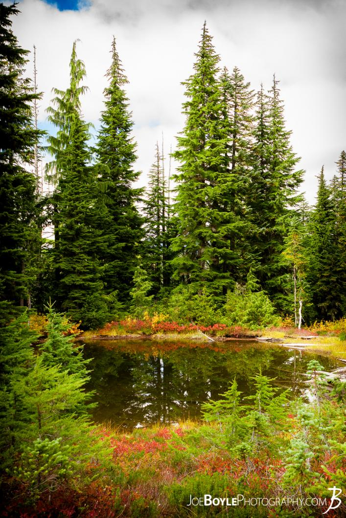 lake-and-trees-on-the-wonderland-trail