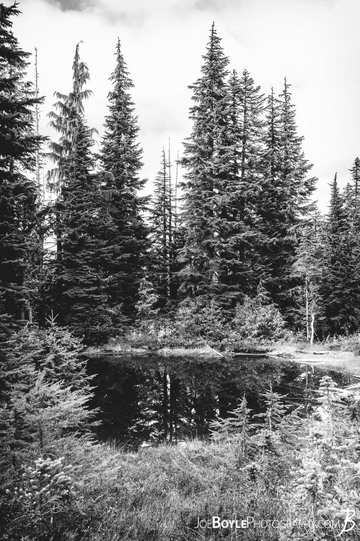 lake-and-trees-on-the-wonderland-trail-black-white