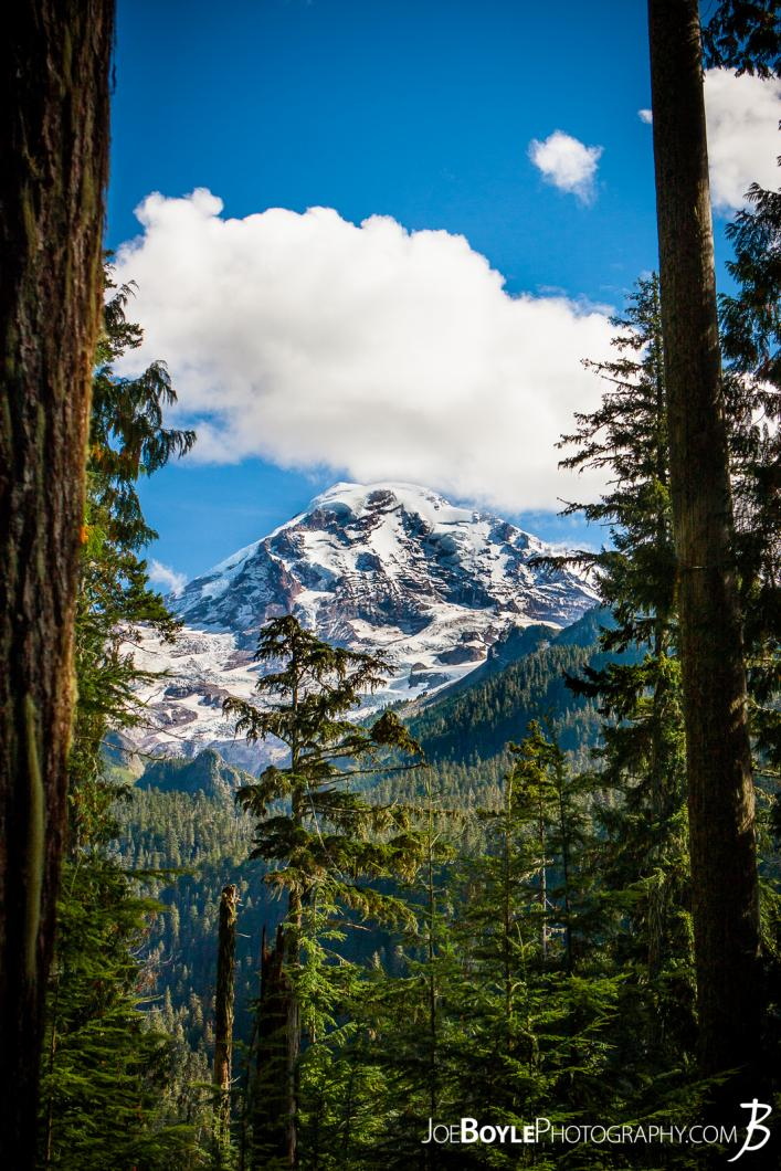 mount-rainer-between-mowich-lake-and-mowich-river-portrait