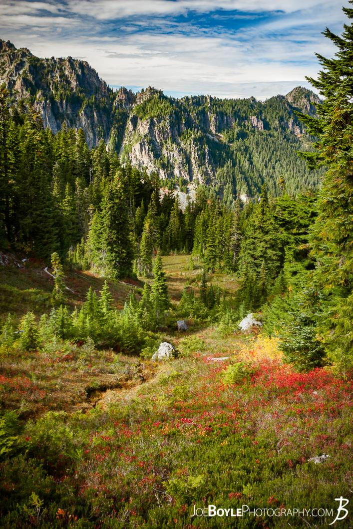 spray-park-trail-on-the-descent-to-carbon-river-campground-portrait