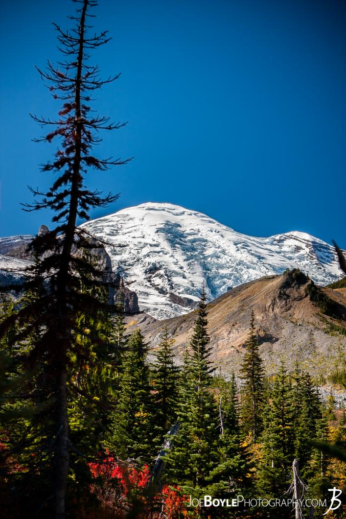 mount-rainier-with-trees-and-rocks-near-panhandle-gap-portrait