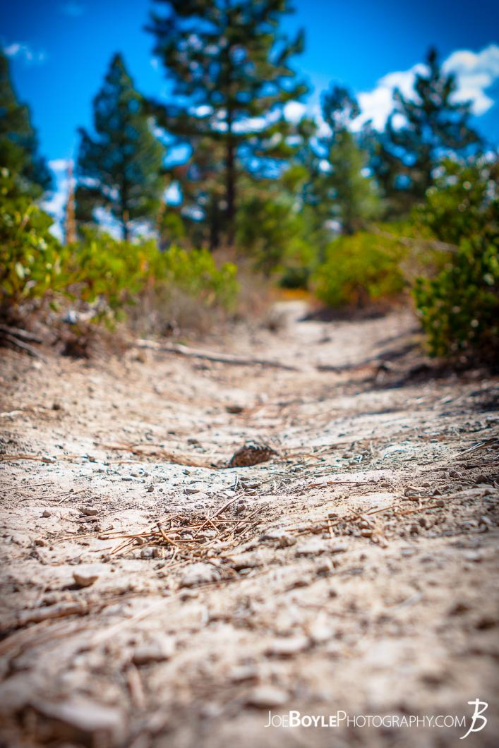 close-up-of-path-trail-in-zion-national-park-ii