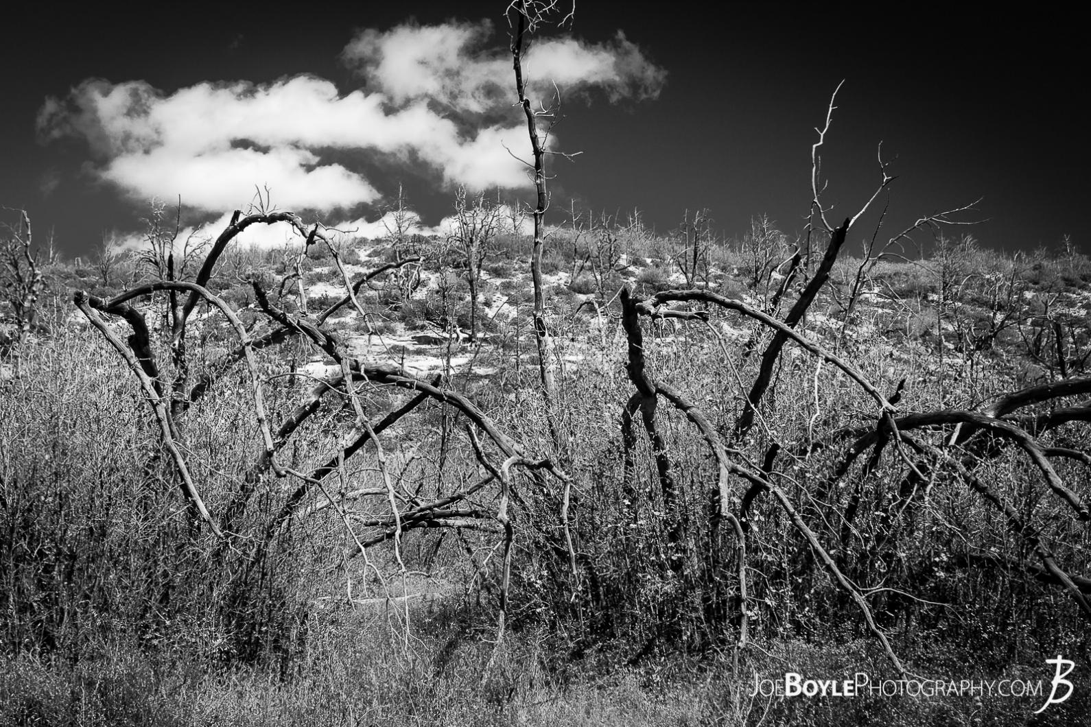 gnarly-withered-surreal-cool-looking-trees-black-white
