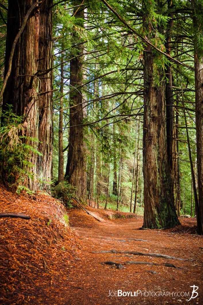 path-in-the-woods-at-university-of-california-santa-cruz