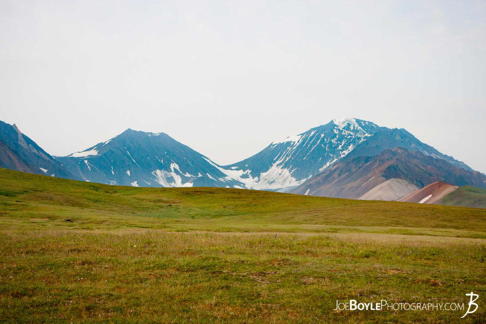 meadow-and-mountains-in-denali-national-park